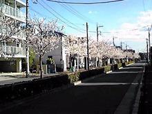 のぶちんのツボ-桜