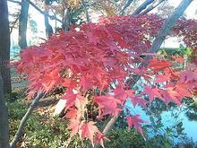 のぶちんのツボ-紅葉5