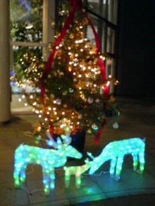 のぶちんのツボ-クリスマスイルミネーション